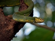 Researchers Trace Coronavirus Outbreak to Snakes in China