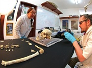 Prehistoric Skeleton Discovered in Southern Mexico