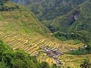 No Clear Path for Golden Rice to Reach Consumers
