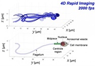 3D Imaging of Sperm Cells at Top Speed Could Improve IVF Treatments