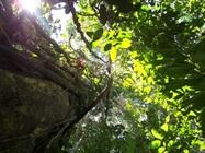 Seeking Ancient Rainforests through Modern Mammal Diets