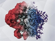 Imaging Method Reveals HIV's Sugary Shield in Unprecedented Detail