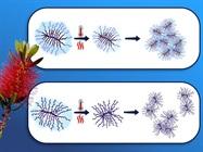 'Smart Bottle Brushes' Provide Molecular Clues