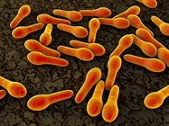 Hospital Floors are Hotspot for Bacteria, Creating Route of Transfer to Patients