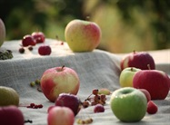 Silk Road Contains Genomic Resources for Improving Apples